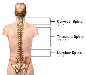 Cervical-vertebrae-6