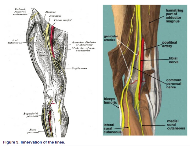Comprehensive Management Of Chronic Knee Pain
